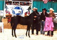 MBG High Selling Stallion/High Selling Weanling