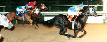 Profit Increase July 1999 at Cy-Fair Stakes Race, Houston TX