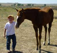 Photo right - Another happy Profit admirer, Jack and Wendy Linford's grandson, Dash, lovin on Angie Cash's yearling filly by Profit Increase.