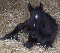 Perks Alive filly
