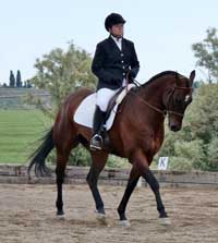 Zippin Classy Pine has earned his ROM in Dressage with 19 points and was named 2013 Reserve in both Amateur and Select Dressage.